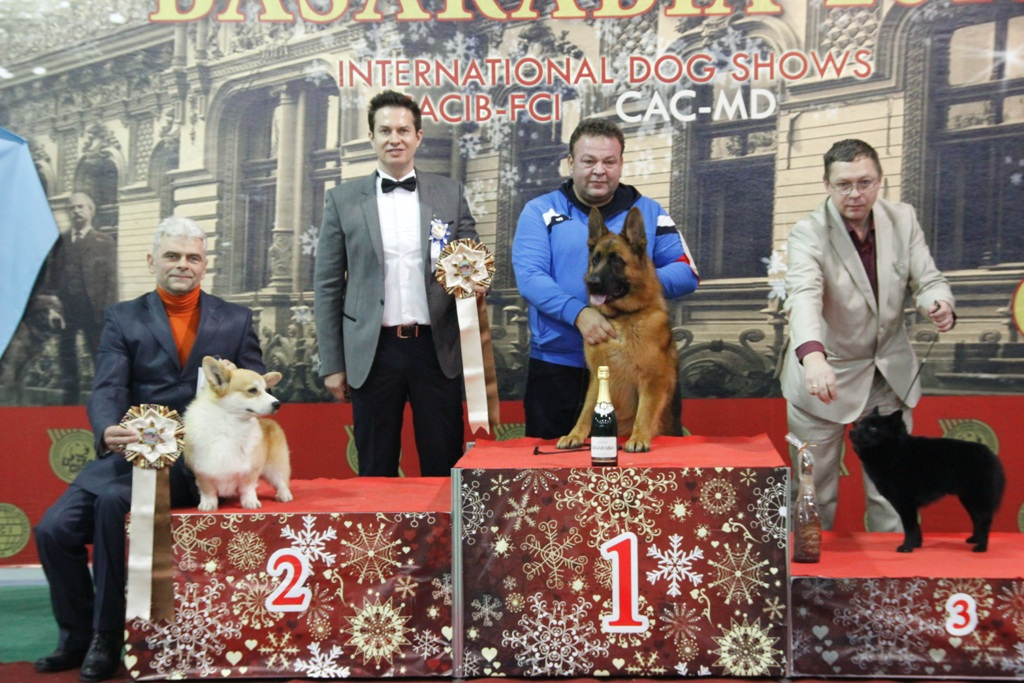 FCI group I - Winners of the International Dog Show «Basarabia 2015» (Moldova), Saturday, 12 December 2015 (BIS photo)