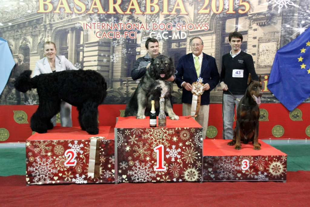 FCI group II - Winners of the International Dog Show «Basarabia 2015» (Moldova), Saturday, 12 December 2015 (BIS photo)