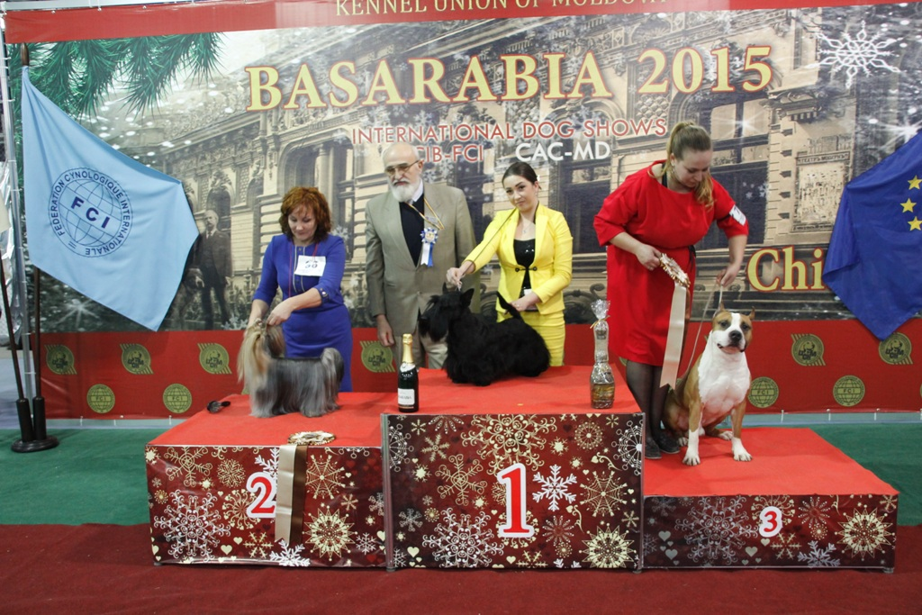 FCI group III - Winners of the International Dog Show «Basarabia 2015» (Moldova), Saturday, 12 December 2015 (BIS photo)
