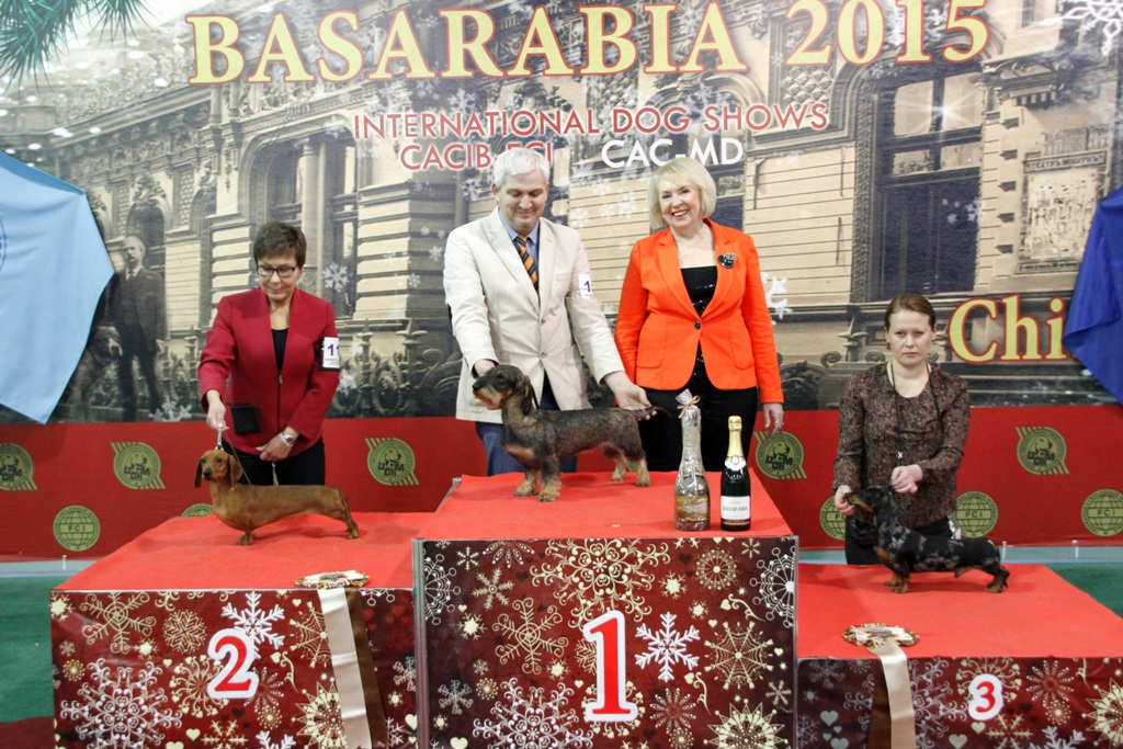 FCI group IV - Winners of the International Dog Show «Basarabia 2015» (Moldova), Saturday, 12 December 2015 (BIS photo)