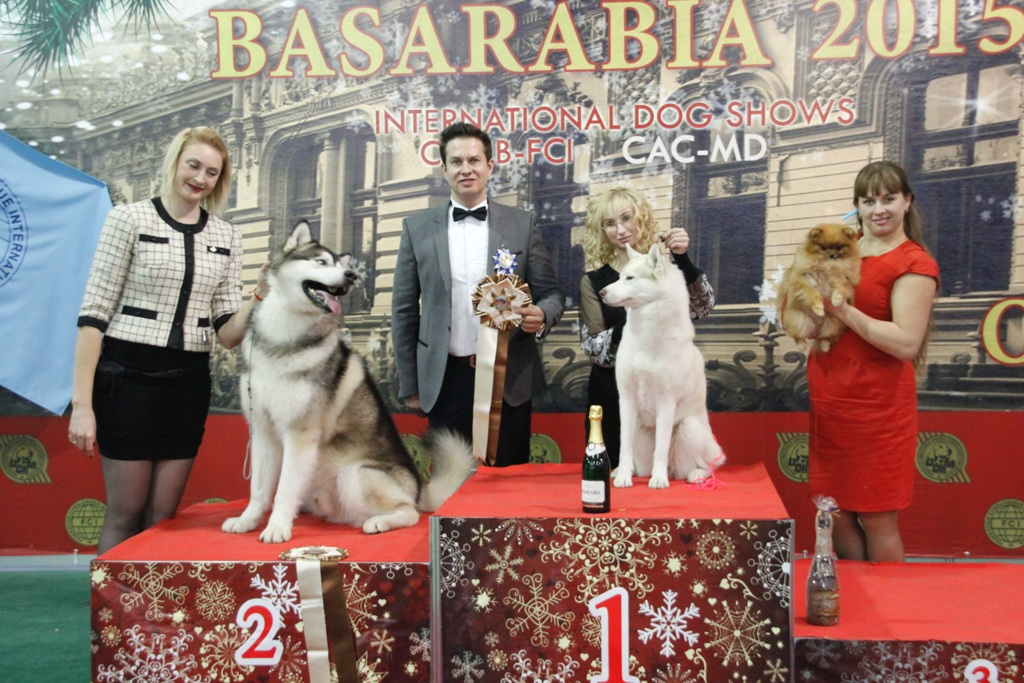 FCI group V - Winners of the International Dog Show «Basarabia 2015» (Moldova), Saturday, 12 December 2015 (BIS photo)