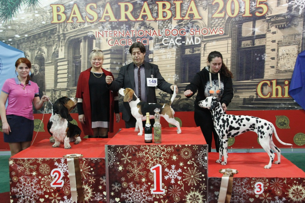 FCI group VI - Winners of the International Dog Show «Basarabia 2015» (Moldova), Saturday, 12 December 2015 (BIS photo)