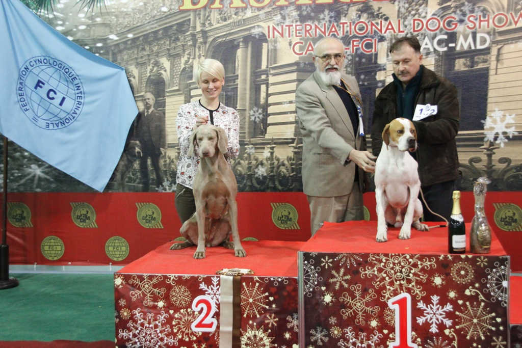 FCI group VII - Winners of the International Dog Show «Basarabia 2015» (Moldova), Saturday, 12 December 2015 (BIS photo)