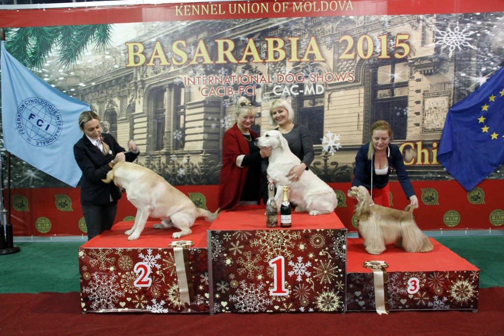 FCI group VIII - Winners of the International Dog Show «Basarabia 2015» (Moldova), Saturday, 12 December 2015 (BIS photo)