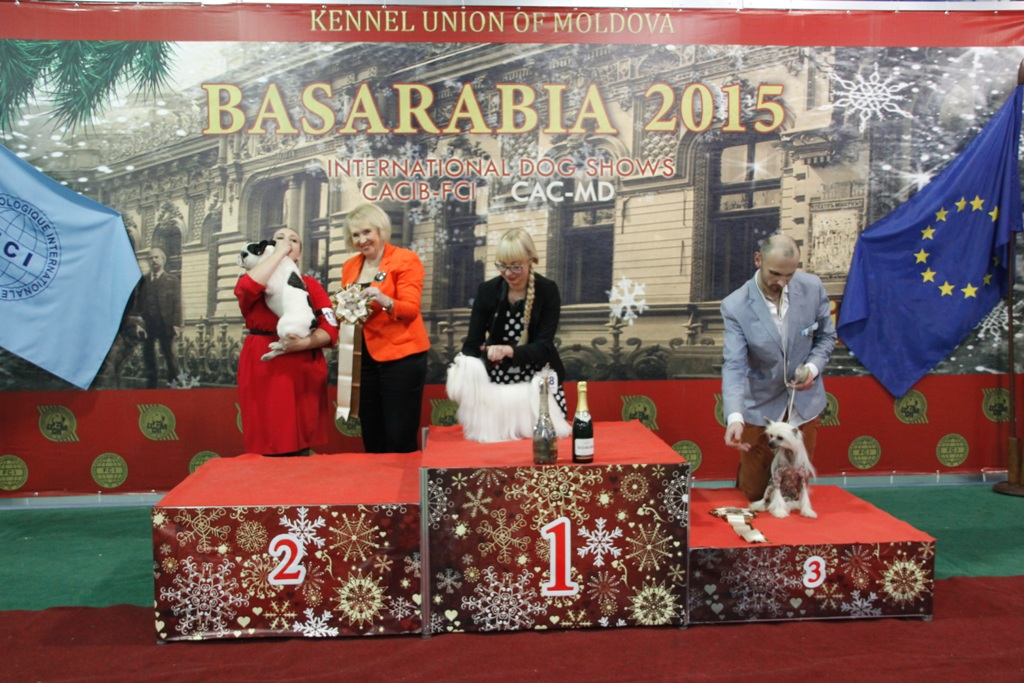 FCI group IX - Winners of the International Dog Show «Basarabia 2015» (Moldova), Saturday, 12 December 2015 (BIS photo)