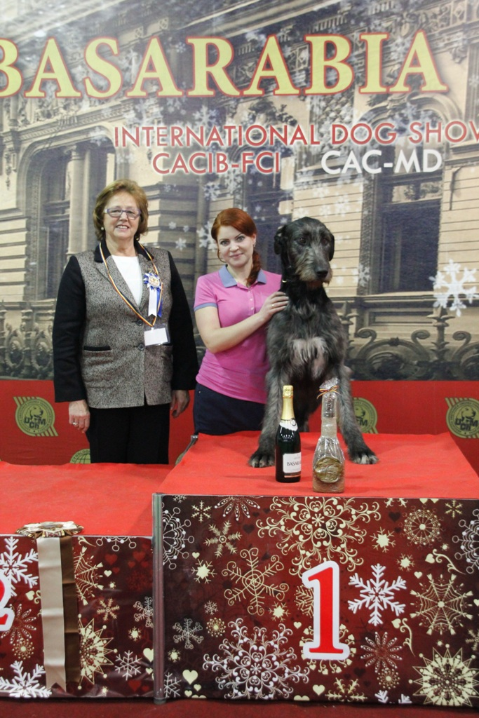 FCI group X - Winners of the International Dog Show «Basarabia 2015» (Moldova), Saturday, 12 December 2015 (BIS photo)