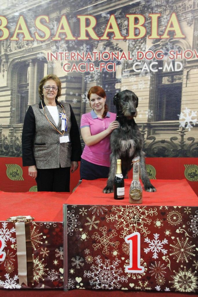 Группа FCI X - Победители Международной выставки собак «Бессарабия 2015» (Молдова), суббота, 12 декабря 2015 года (BIS фото)