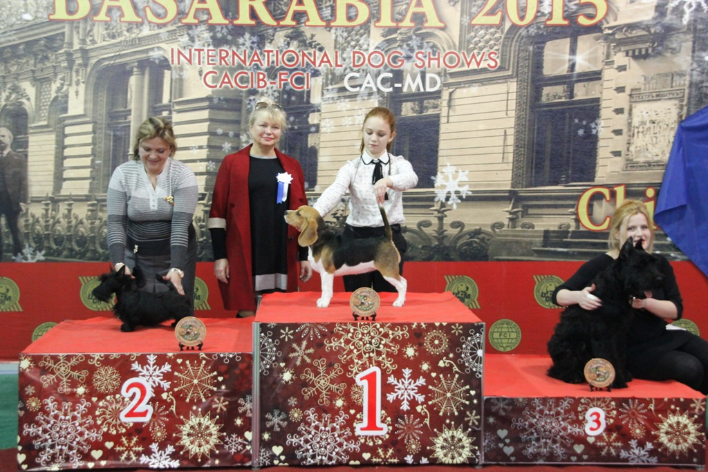 Best Minor Puppy (Baby) - Winners of the International Dog Show «Basarabia 2015» (Moldova), Saturday, 12 December 2015 (BIS photo)