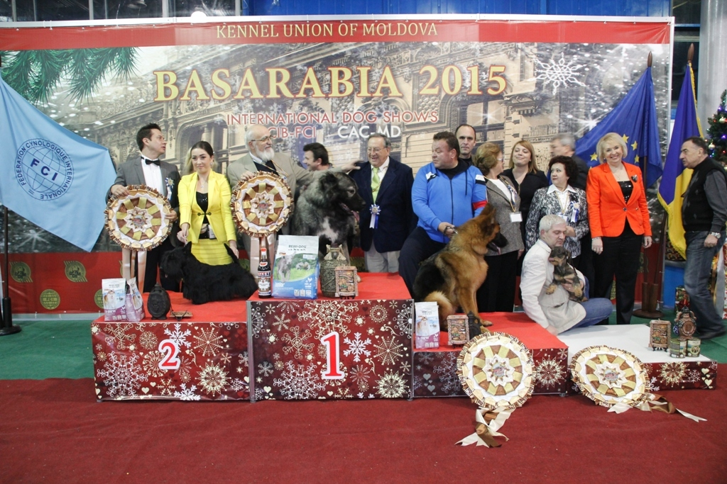 Best in Show (BIS) - Winners of the International Dog Show «Basarabia 2015» (Moldova), Saturday, 12 December 2015 (BIS photo)