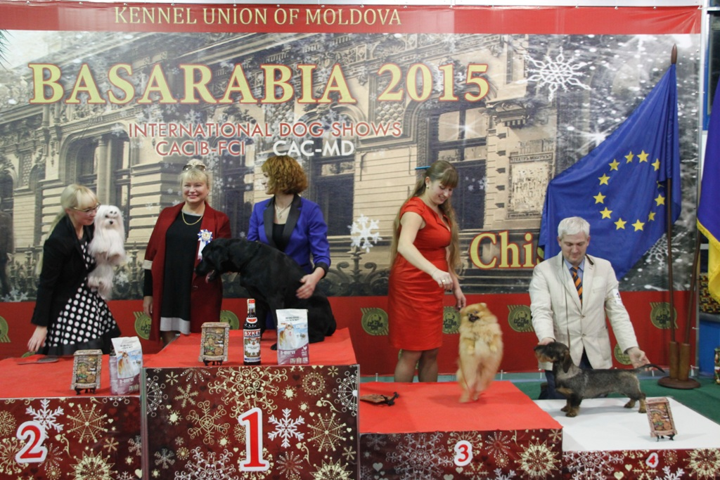 Best Junior - Winners of the International Dog Show «Basarabia 2015» (Moldova), Saturday, 12 December 2015 (BIS photo)