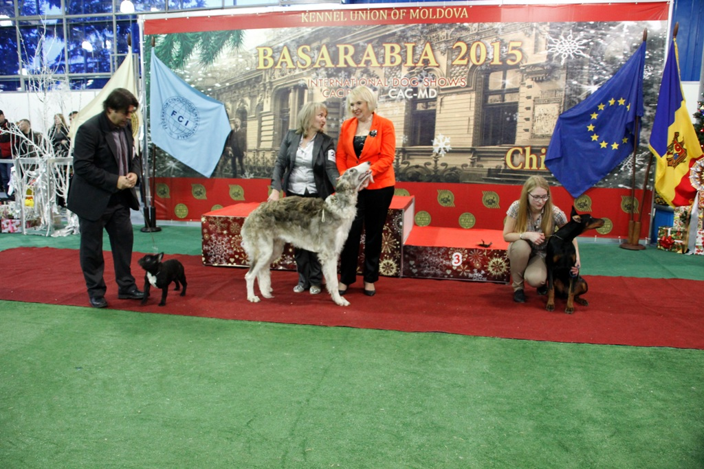 Best Puppy - Winners of the International Dog Show «Basarabia 2015» (Moldova), Saturday, 12 December 2015 (BIS photo)