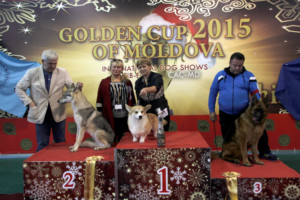 FCI group I - Winners of the International Dog Show «Golden Cup of Moldova 2015» (Moldova), Sunday, 13 December 2015 (BIS photo)