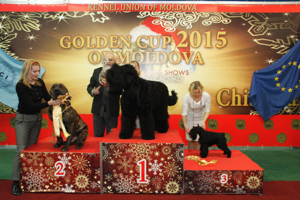 FCI group II - Winners of the International Dog Show «Golden Cup of Moldova 2015» (Moldova), Sunday, 13 December 2015 (BIS photo)