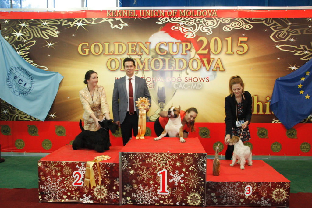 FCI group III - Winners of the International Dog Show «Golden Cup of Moldova 2015» (Moldova), Sunday, 13 December 2015 (BIS photo)