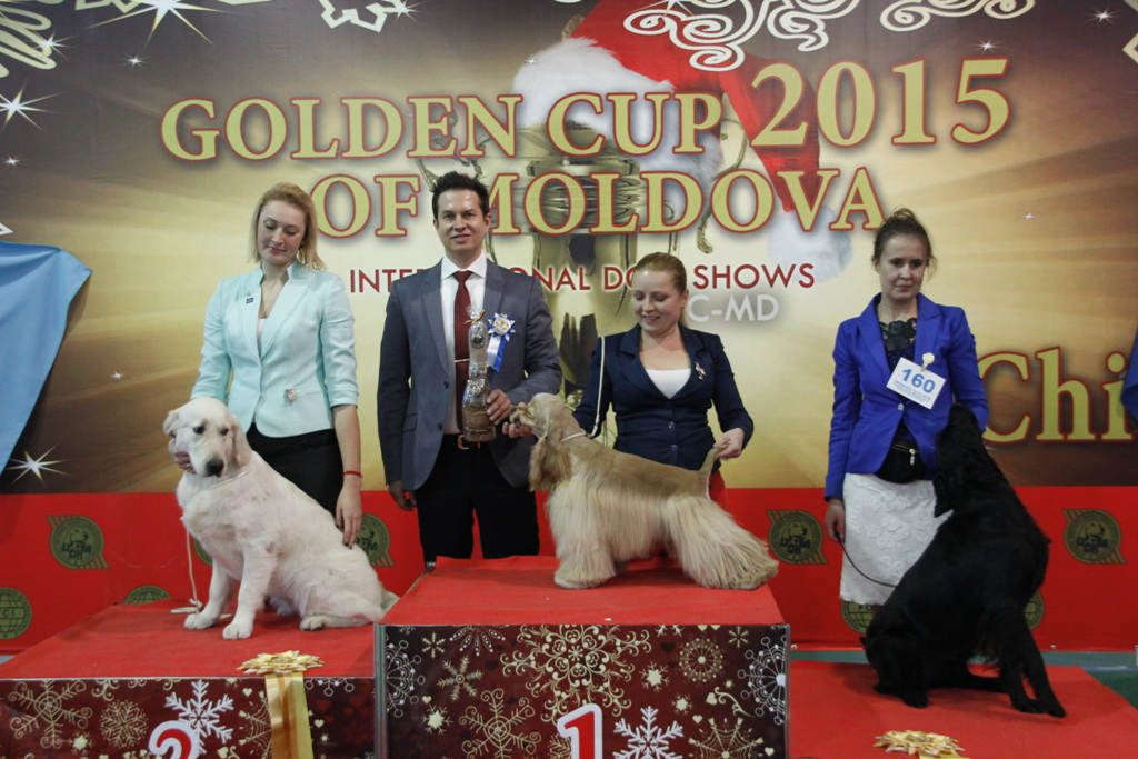 FCI group VIII - Winners of the International Dog Show «Golden Cup of Moldova 2015» (Moldova), Sunday, 13 December 2015 (BIS photo)