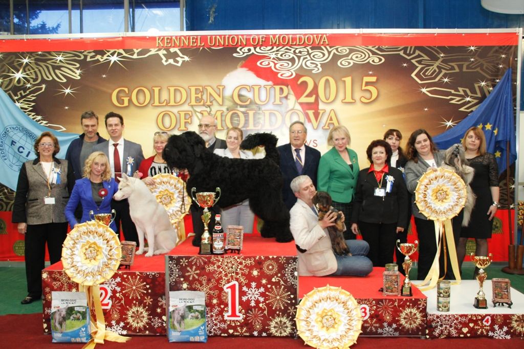 Best in Show (BIS) - Winners of the International Dog Show «Golden Cup of Moldova 2015» (Moldova), Sunday, 13 December 2015 (BIS photo)