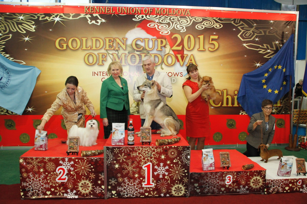 Best Junior - Winners of the International Dog Show «Golden Cup of Moldova 2015» (Moldova), Sunday, 13 December 2015 (BIS photo)