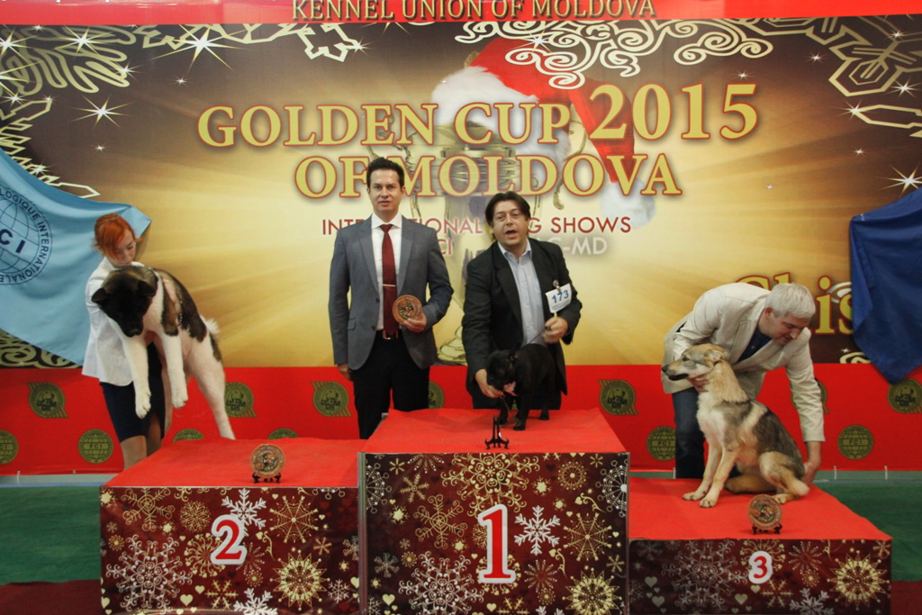 Best Puppy - Winners of the International Dog Show «Golden Cup of Moldova 2015» (Moldova), Sunday, 13 December 2015 (BIS photo)