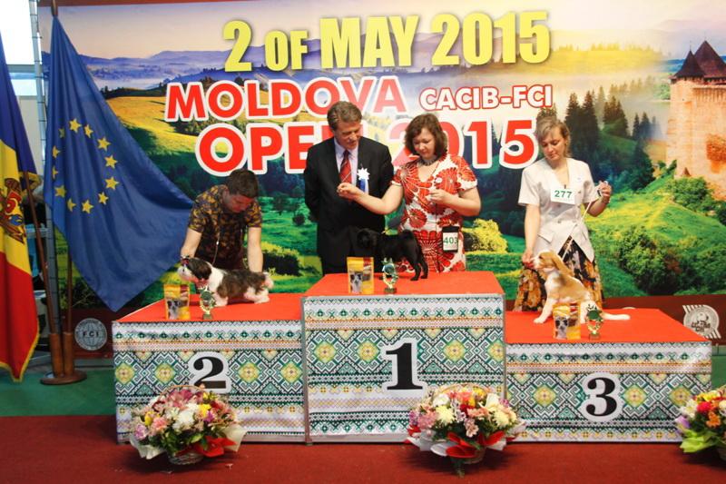 Лучший Бэби - Победители Международной выставки собак «Moldavian Open 2015», 2 мая (суббота)