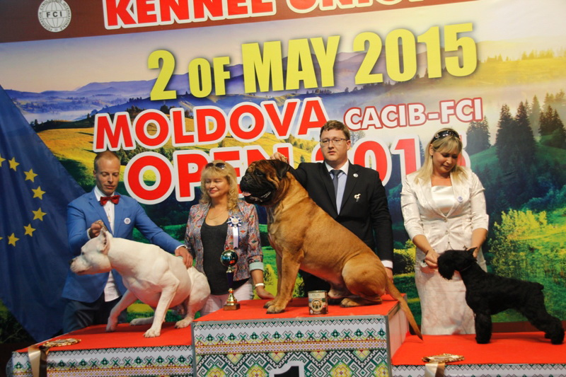 FCI group II - Winners of the International Dog Show  «Moldavian Open 2015», 2 May (Saturday)