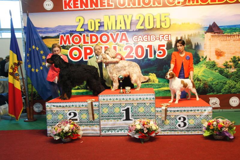 Группа FCI VII - Победители Международной выставки собак «Moldavian Open 2015», 2 мая (суббота)