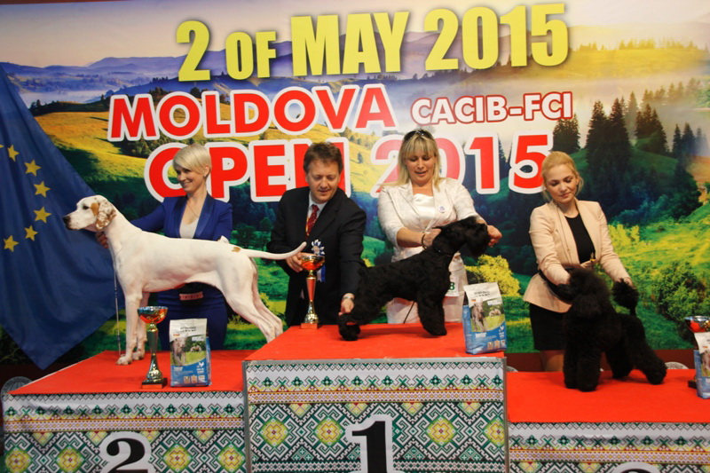 Best Junior - Winners of the International Dog Show  «Moldavian Open 2015», 2 May (Saturday)