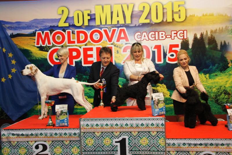 Лучший юниор - Победители Международной выставки собак «Moldavian Open 2015», 2 мая (суббота)