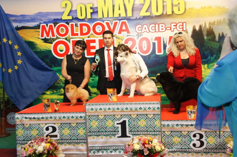 Best Puppy - Winners of the International Dog Show  «Moldavian Open 2015», 2 May (Saturday)