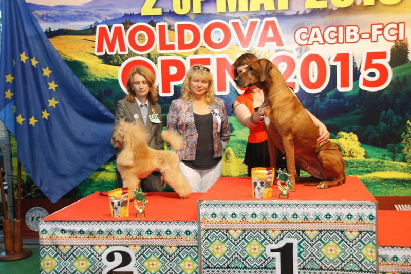 Лучший ветеран - Победители Международной выставки собак «Moldavian Open 2015», 2 мая (суббота)